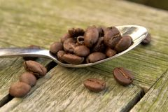 Coffee beans on spoon 01 Royalty Free Stock Photography