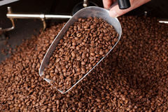 Coffee Beans in the spoon Royalty Free Stock Image