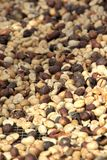 Coffee beans drying Royalty Free Stock Photography