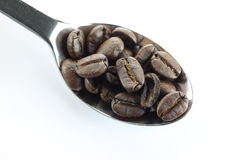 Coffee beans in a stainless steel spoon. Royalty Free Stock Photo