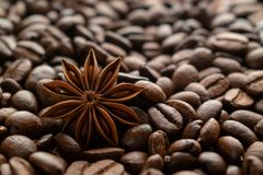 Coffee beans and star anise royalty free stock photo