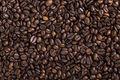Coffee beans. Texture or background Royalty Free Stock Photos
