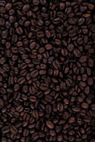 Coffee beans texture Royalty Free Stock Photo