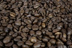 Coffee beans texture Stock Image