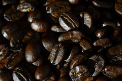 Coffee beans texture. Useful for backgrounds Stock Images