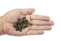 Coffee beans on top of palm Stock Photos