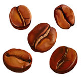 Coffee beans vector illustration  painted Royalty Free Stock Photos