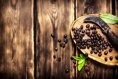 Coffee beans with vintage knife. On the saw cut of wood. On wooden background Stock Image