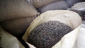 Dried coffee beans in sacks. Coffee beans waiting in sacks are ready for roasting process Royalty Free Stock Image