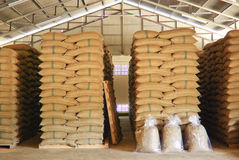 Coffee beans warehouse Royalty Free Stock Image