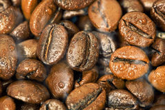 Coffee Beans, Water and Smoke. Coffee Beans with drops of water and smoke Stock Images