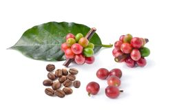 Coffee beans on white background. The coffee beans on white background Royalty Free Stock Photo