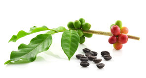 Coffee beans on white background.  Royalty Free Stock Photography