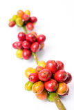 Coffee beans on white background Royalty Free Stock Photos