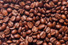 Coffee beans on white background. Coffee beans texture brown color stock photography