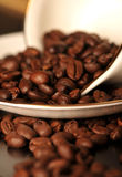 Coffee beans and white coffee cup Stock Image