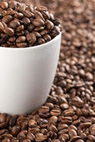 Coffee beans with white cup Stock Images