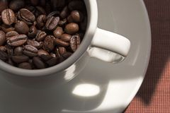 Coffee beans in white cup. Cup filled with coffeee beans royalty free stock photo