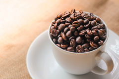 Coffee beans in the white cup. Coffee beans in the white cup in the morning light Royalty Free Stock Photos