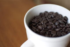 Coffee Beans in White Porcelain Cup. A white mug is full of coffee beans shining in the light with selective focus and intentional shallow depth of field.  There Royalty Free Stock Photos