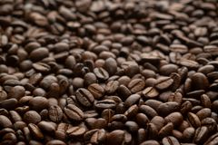 Pure Arabica coffee beans texture royalty free stock photos