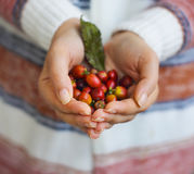 Coffee beans in woman hands Stock Image