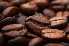 Coffee beans. On wood background Royalty Free Stock Photo