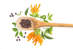 Coffee beans on wood ladle and orange trumpet flowers Royalty Free Stock Images