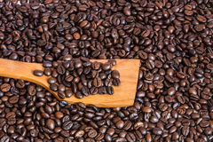 Coffee beans on wooden spatula Stock Image