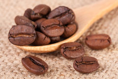 Coffee beans in a wooden spoon on sackcloth.  Stock Image