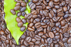 Coffee beans. On wooden surface Stock Photography