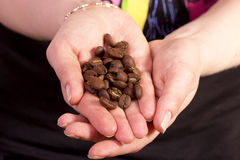 Coffee beans in your hands. Brown coffee beans in female hands Stock Images