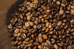 Coffee been Stock Image