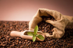 Coffee beens in burlap sack Stock Image