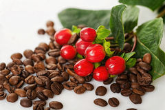 Coffee berries and beans Stock Photo