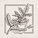 Coffee Berries Twig Icon Vector Illustration. Coffee berries twig icon drawn in black and white surrounded by square frame. Vector illustration with tiny berries Royalty Free Stock Photography