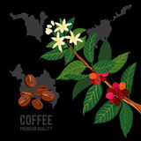 Coffee branch on the background of the map Stock Photography