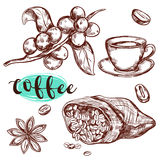 Coffee Branch Icon Set. Coffee branch  icon set with spices cup of coffee and headline vector illustration Royalty Free Stock Photo