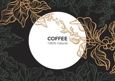 Coffee branch with leaf, bean. Retro vector. Template. Vector template of art line coffee branch with leaf, natural bean. Sketch vintage style. Night, moon vector illustration