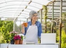 Coffee break. Beautiful mature woman working in a greenhouse at the coffee break Stock Photo