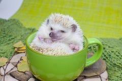 Free Coffee Break Concept. The Hedgehog Is In A Big Green Mug Stock Photo - 157973630