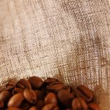 Coffee burlap background. For your design Stock Photos