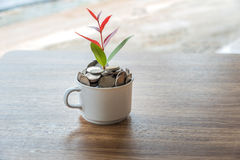 The coffee business growth accumulate. Stock Images