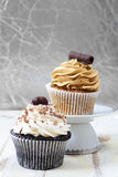 Coffee and chocolate cupcakes. Royalty Free Stock Photography