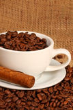Coffee and cigar. Coffee beans in white cup with cuban cigar royalty free stock photography