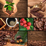 Coffee collage. Collage with coffee beans, coffee cherries, weight and other Stock Image