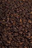 Coffee crop. Texture in a perspective view Royalty Free Stock Photos