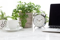 Coffee Cup Alarm Clock Laptop And Plants On Table royalty free stock photos