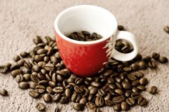 Coffee cup and beans. Close up of roasted coffee beans and cup, light background Royalty Free Stock Photos