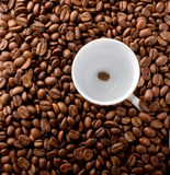 Coffee cup on beans background. White coffee cup on beans background Royalty Free Stock Photos